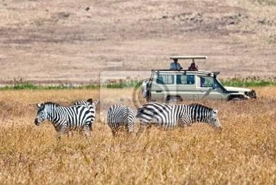Turistas wathing comer cebras