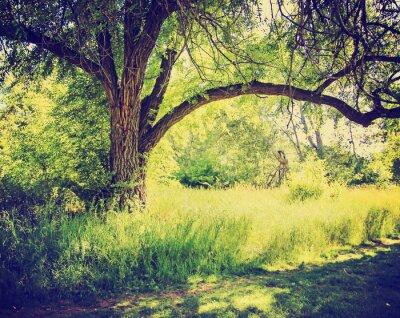 Póster un bosque o parque con árboles con hojas de otoño hace con retr
