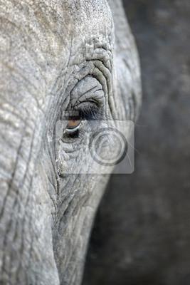 Un cierre para arriba de un ojo de los elefantes