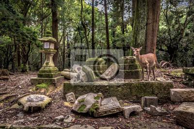 Un ciervo solitario deambulando en un templo rodeado de un florest en Nara en Japón