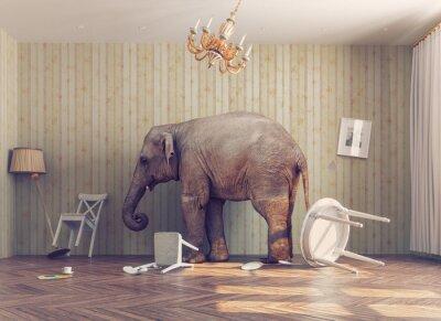 Póster Un elefante en una habitación