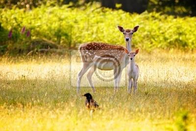 Un gamo Hind y su ternero joven