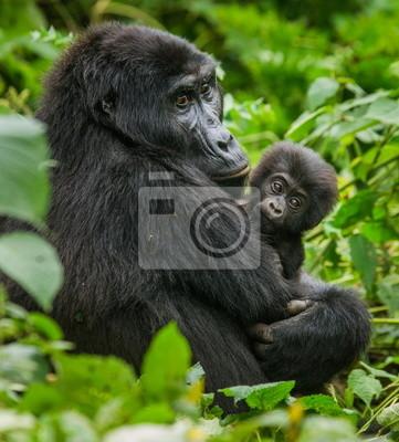 Un gorila de montaña femenina con el bebé