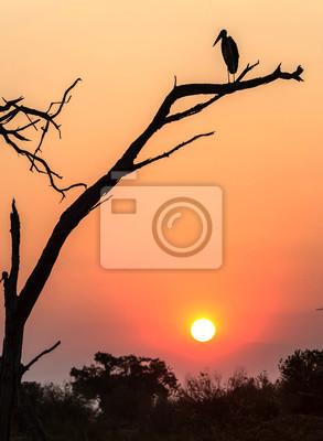 Un pájaro sentado en un árbol con una hermosa puesta de sol en Botswana, África