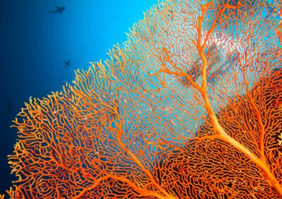 Póster Un par de buzos en los arrecifes de coral