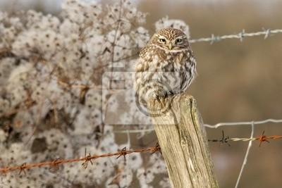Un pequeño búho encaramado en un poste de la cerca en invierno