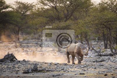 Un rinoceronte negro en el Parque Nacional de Etosha.