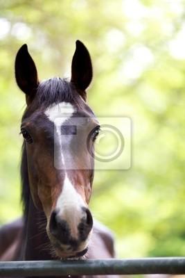 Una foto de la cabeza de un caballo castaño