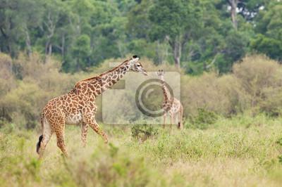 Una jirafa de caminar en la selva africana