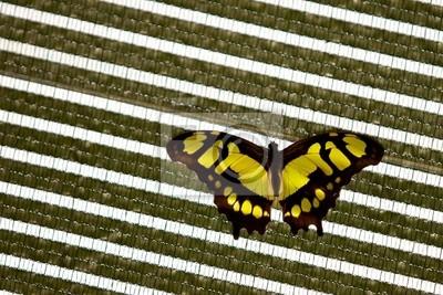 Una mariposa de malaquita sobre un fondo abstracto