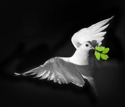 Póster Una paloma blanca