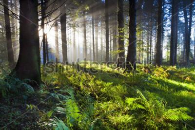 Póster Union Wood amanecer 3