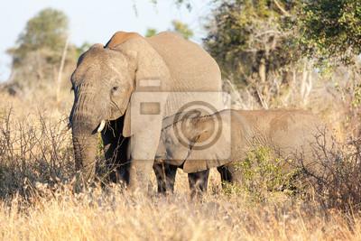 Vaca del elefante y la pantorrilla