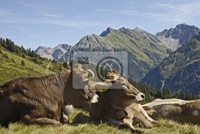 Vacas en un pasto de montaña en el Starzelalpe