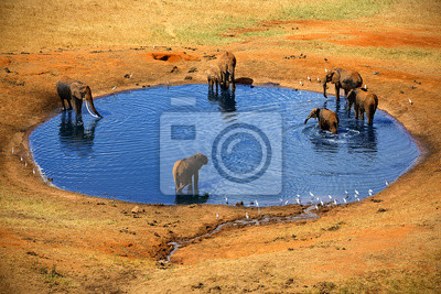 Varios elefantes en la fuente