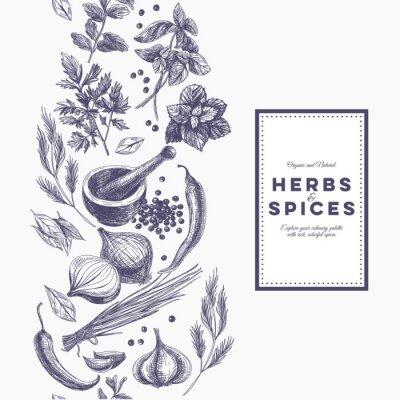 Póster Vector de fondo con hierbas dibujadas a mano y especias.
