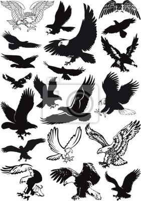 vector de las águilas de la colección