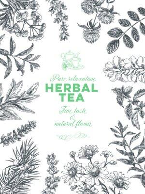 Póster Vector hand drawn tea herb Illustration.
