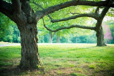 Póster Verano árboles preciosos y hierba en el establecimiento de parque