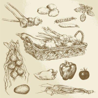 Póster verduras - colección de dibujado a mano