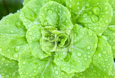verduras frescas hidroponía con el rocío del agua