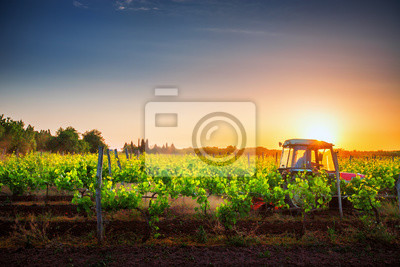 Vides en el campo y un tractor rojo al atardecer