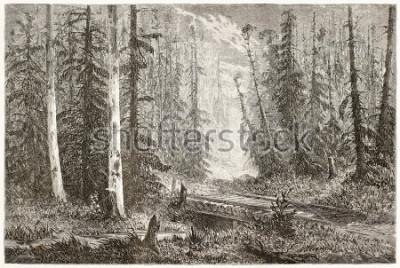 Póster Vieja ilustración del bosque ruso del abeto. Creado por Moynet, publicado en Le Tour du Monde, París, 1867.