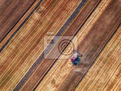 Vista aérea de la cosechadora cosechadora de la agricultura cosecha de la máquina campo de trigo maduro de oro