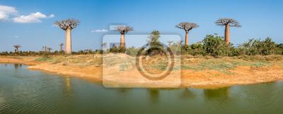 Vista panorámica a los Baobabs árboles cerca de Morondava