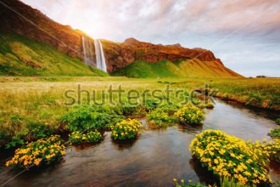 Póster Vista preciosa del campo verde floreciente en luz del sol. Escena dramática y hermosa. Atracción turística popular. Ubicación lugar famoso Seljalandsfoss cascada, Icelandia, Europa. Descubre el mundo