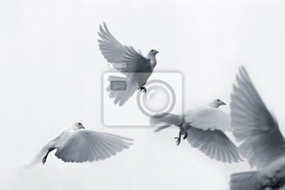 Volar Palomas Blancas Carteles Para La Pared Pósters Palomas
