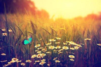 Póster Vuelo de la mariposa de la primavera flores prado margarita