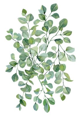 Póster Watercolor banner background with hand painted silver dollar eucalyptus. Green branches and leaves isolated.  Floral illustration for wedding inspiration card, template, print.