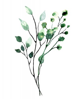 Póster Watercolor branch with green leaves. Hand painting floral illustration. Leaf, plant isolated on white background.