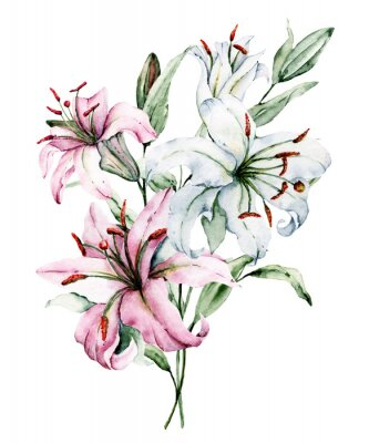 Póster Watercolor flowers lilies. Floral bouquet, clip art. Arrangement with lily perfectly for printing design on invitations, cards, wall art and other. Isolated on white. Hand painted.