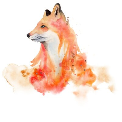 Póster Watercolor fox  Animal illustration isolated on white background.