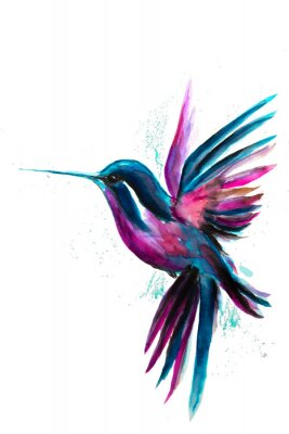 Póster Watercolor Hummingbird flying and isolated on white background. Rainbow bird. Tropical colibri watercolor illustration.