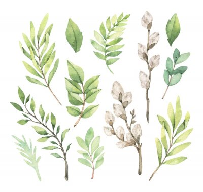 Póster Watercolor illustrations with eucalyptus, green leaves and willow. Easter brunches. Spring greenery design elements. Perfect for cards, invitations, banners, posters.