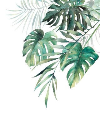 Póster Watercolor tropical leaves poster. Hand painted exotic monstera and palm green branches composition on white background. Summer plants illustration