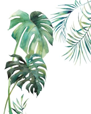 Póster Watercolor tropical leaves poster. Hand painted exotic monstera and palm green branches isolated on white background. Summer plants illustration