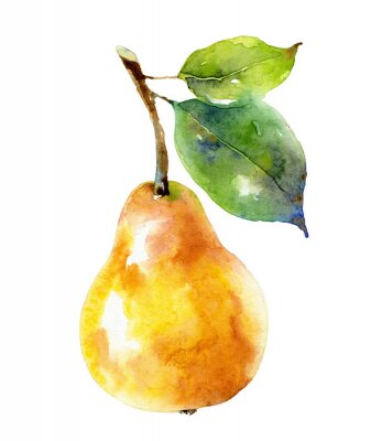 Póster Watercolor yellow pear isolated on white background