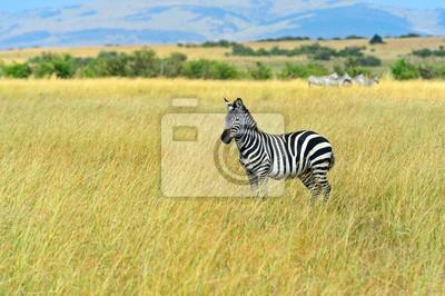 Wildebeest en la sabana