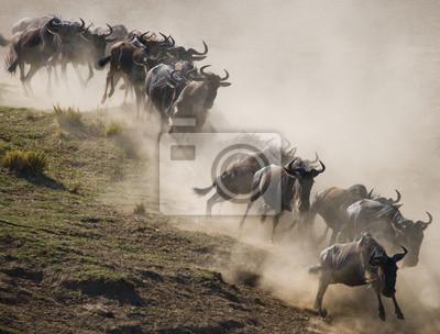 Wildebeests corriendo a través de la sabana. Gran migración. Kenia. Tanzania. Parque Nacional Masai Mara. Una excelente ilustración.