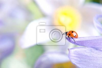 Mariquita en flor © Anton Violin # 22253389