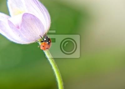 Mariquita en flor © Anton Violin # 22253390