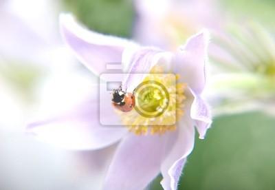 Mariquita en flor © Anton Violin # 22253391