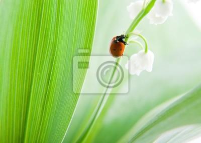 Mariquita en flor © Anton Violin # 22694048