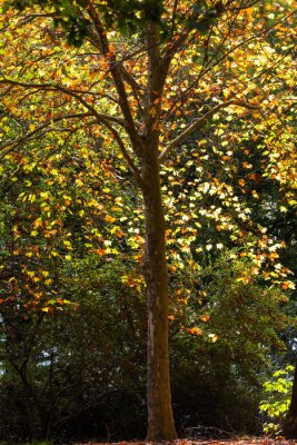 Yellow and orange autumn colored leaves in the tree