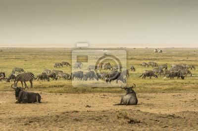 Zebre, Bisonti e altri animali nella savana