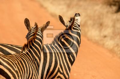 Zebre vicina